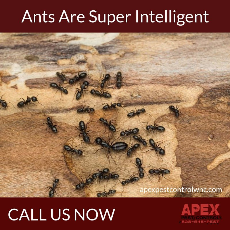 What Attracts Ants? 3