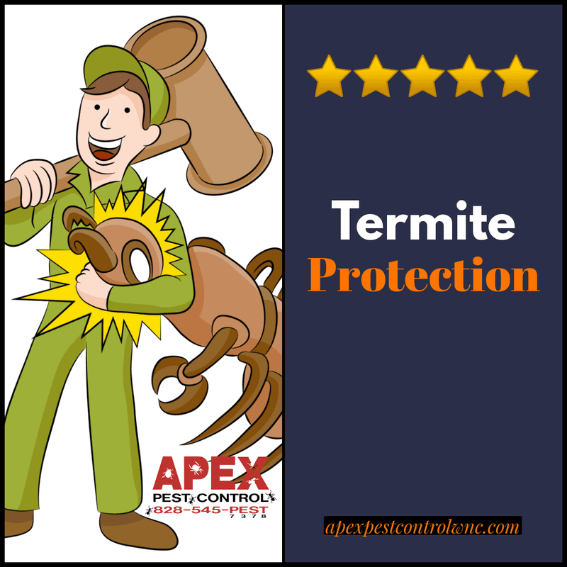 Air Conditioning and Termites 2
