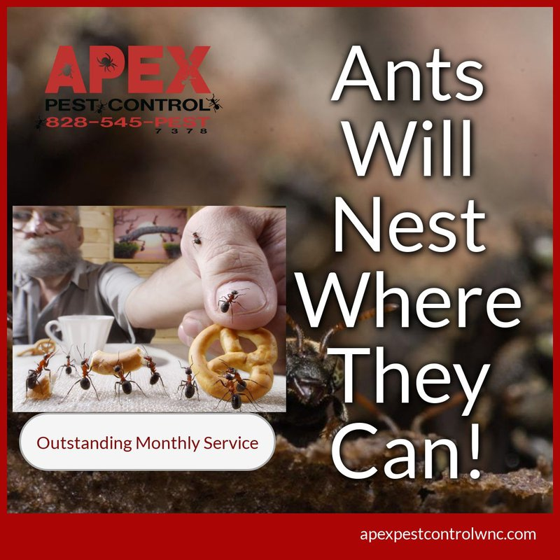 What Attracts Ants? 1
