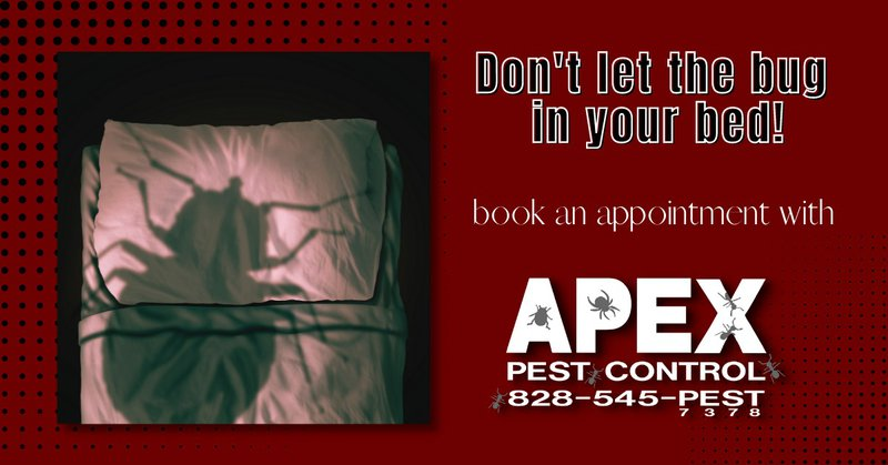 Bothered by Bed Bugs? Know the Best Treatment that Really Works 6