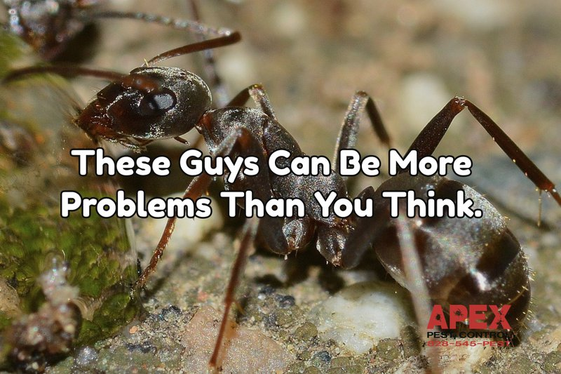 10 Top Tips To Deal With Ants This Year 1