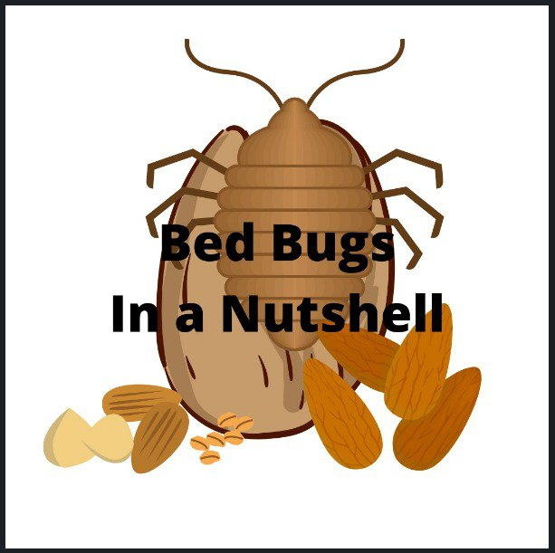Bothered by Bed Bugs? Know the Best Treatment that Really Works 1