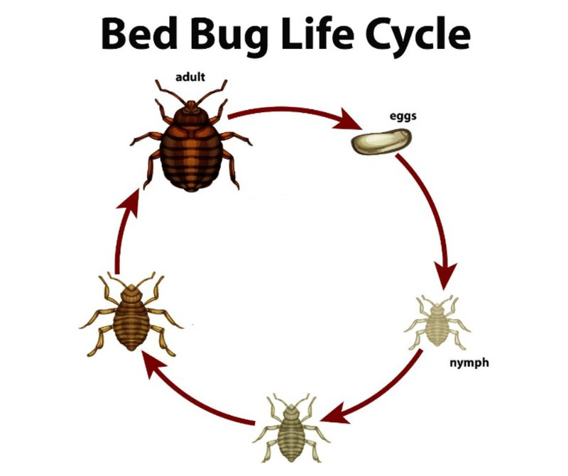 Bothered by Bed Bugs? Know the Best Treatment that Really Works 5