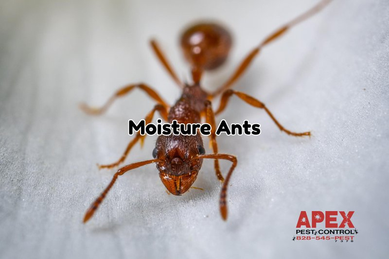 Bugs Attracted to Moisture 7