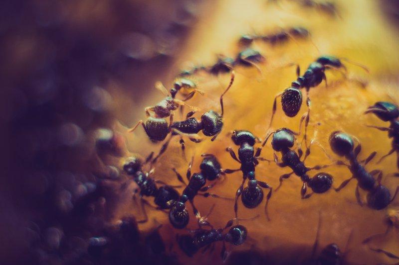 asheville pest control