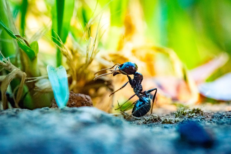 Ant hunting with my macro devices for an epic photo session during the golden hour.Here is a small ant doing its workout.
