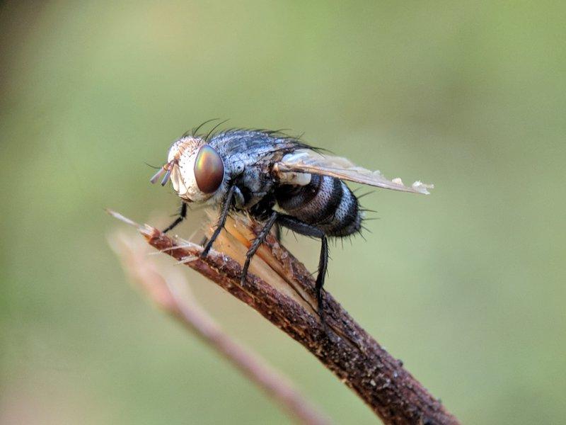 flies in your home