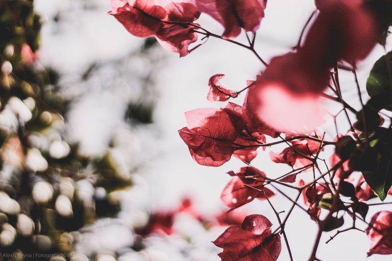 Blur Pink