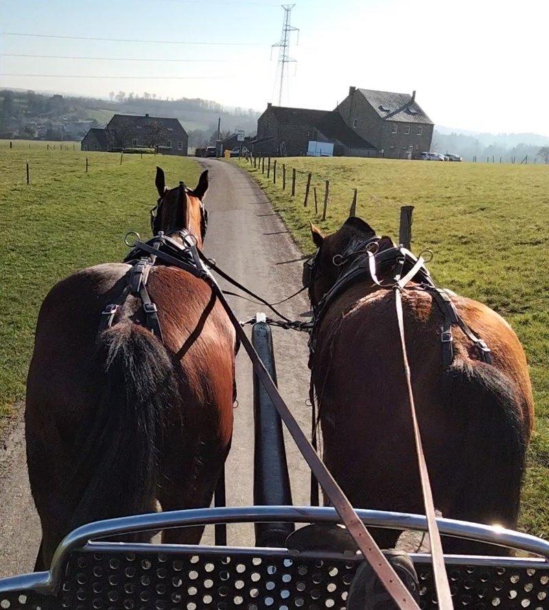 Wandeling in een koets getrokken door paarden in de Ardennen