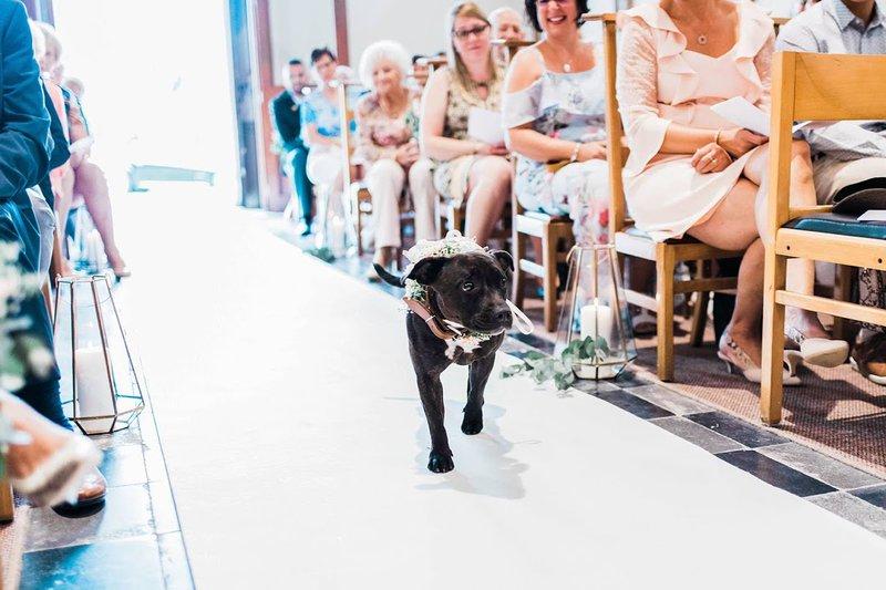 Je trouwe viervoeter op je trouwdag - House of Weddings