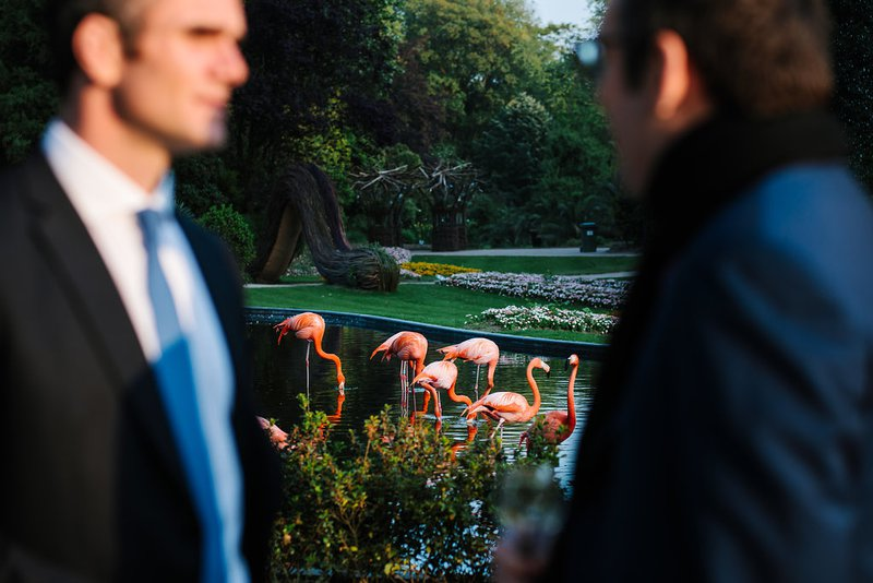 Gasten bij flamingo's in Zoo van Antwerpen - House of Weddings