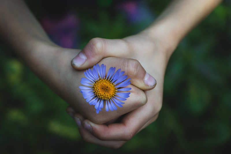 small dirty hands of a child holding a blue and yellow flower tightly