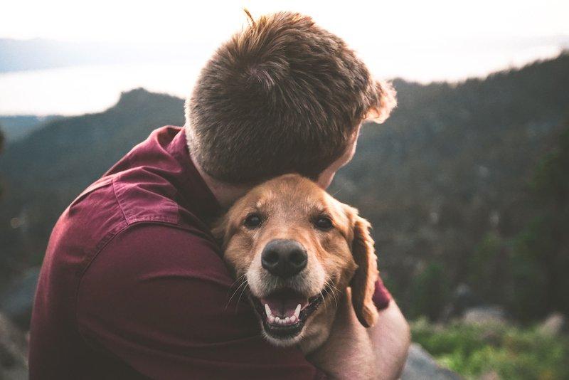 Tierversicherung - Schutz Tier und Halter! Unsere Haustiere sind uns ans Herz gewachsen oder wir haben beruflich mit ihnen zu tun. Gleich, ob unser Tier unser liebster Gefährte ist oder ob wir züchten und aus wirtschaftlichen Gründen Tiere halten, es kann immer etwas mit ihnen oder durch sie geschehen, das für uns mit erheblichen finanziellen Folgen verbunden ist. Deswegen ist es klug, Vorsorge zu treffen. Es gibt folgende Arten von Tierversicherungen: Tierhalterhaftpflicht Tierkrankenversicherung