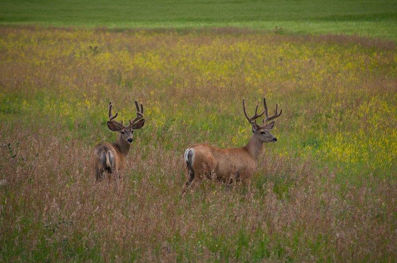 Jagd-Haftpflicht - Ein Muss für alle Jäger Wer in Deutschland auf die Jagd gehen will, muss nicht nur eine Jagdprüfung ablegen, sondern braucht auch eine Jagd-Haftpflicht. Schließlich kann auf der Pirsch einiges passieren: Ein Querschläger verletzt einen Spaziergänger, Ihr Jagdhund beißt einen Pilzsammler oder ein Jagdgast verletzt sich am Hochsitz. Die Jagd-Haftpflicht sichert Ihr Jagdrisiko umfassend und zeitgemäß ab. Sie kommt für den entstandenen Schaden auf und sichert Sie gegen unberechtigte Forderungen