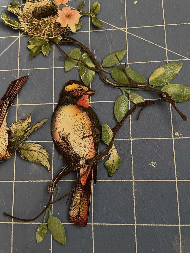 Altered bird cage