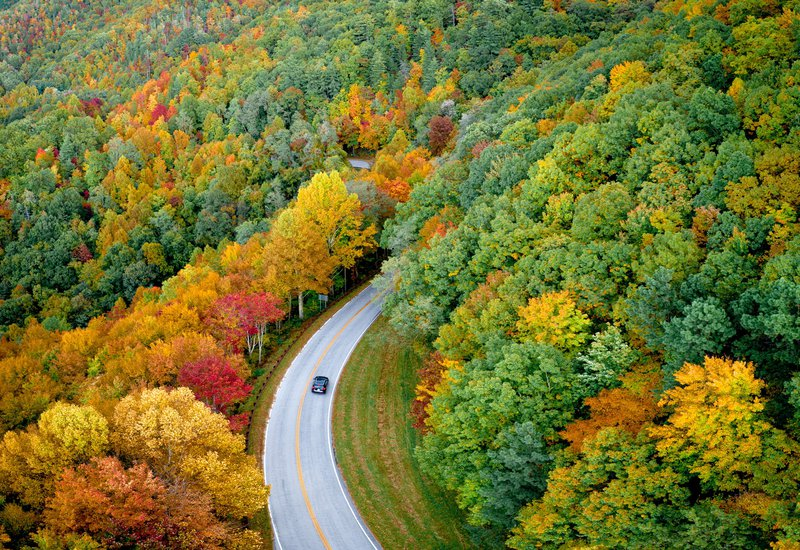 eagle eye view of forrest with road winding through it and one car on the road