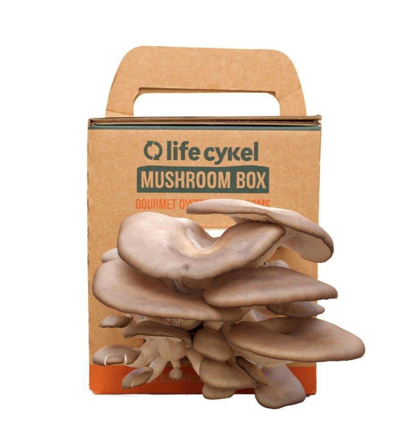 oyster mushroom grow kit