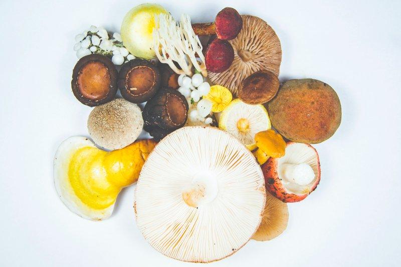 different mushroom types