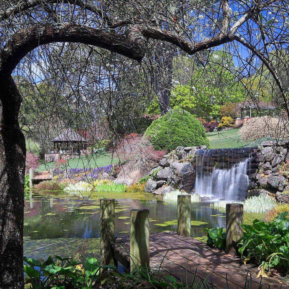 Windyridge Garden, Mt Wilson, NSW.