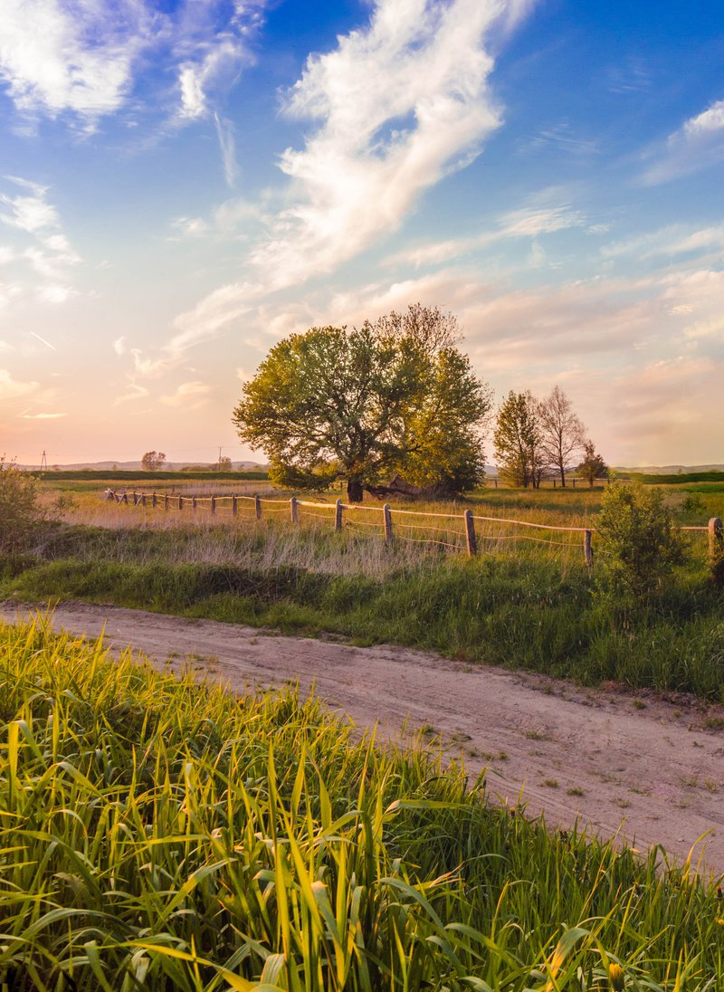 landelijk pad met bomen op de achtergrond