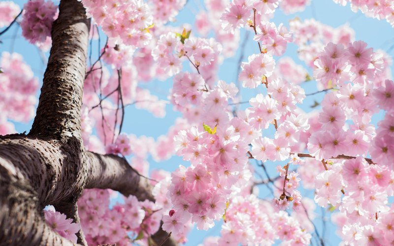 State of the world will soon be like cherry blossom
