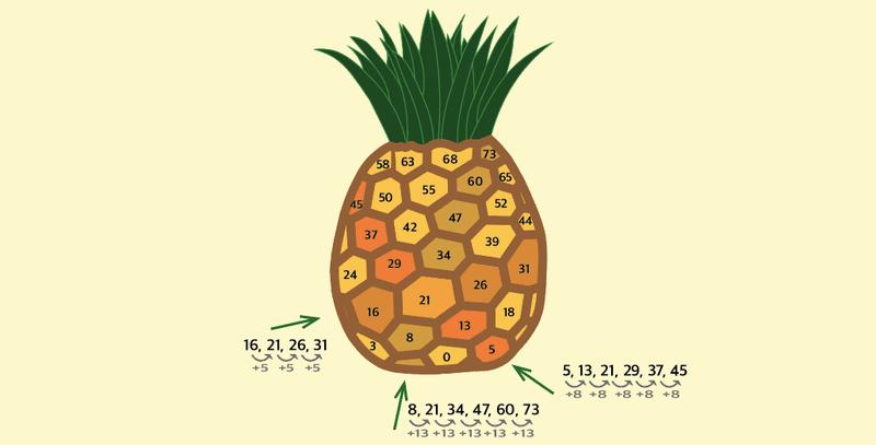 ananas fibonacci