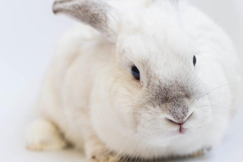 De responsible person is verantwoordelijk voor dierproeven