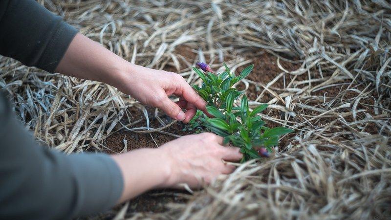 Wijk-werken kan ingeschakeld worden voor klein tuinonderhoud