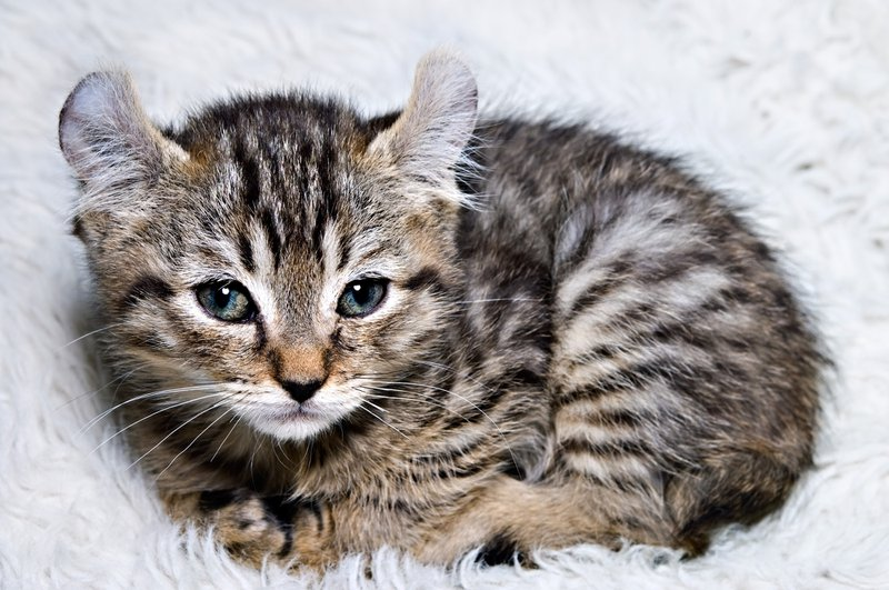 cat depression
