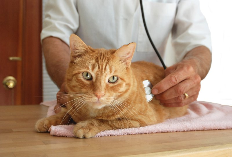 Cat Diseases to Watch Out For