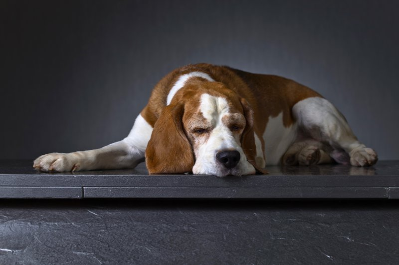 is my dog depressed
