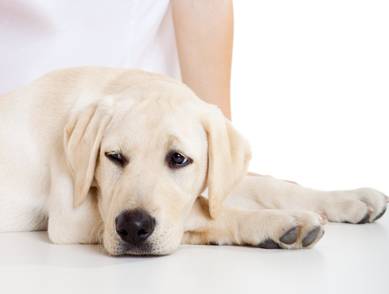 What Causes Bladder Infections in Dogs?