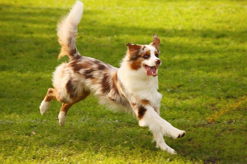 Top emergencies in dogs