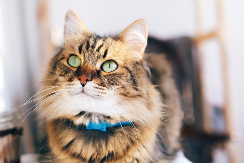 cat kidney issues