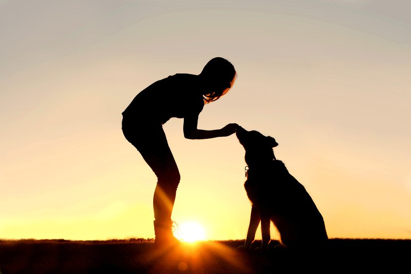 Why dogs are living longer and what that means for pet parents