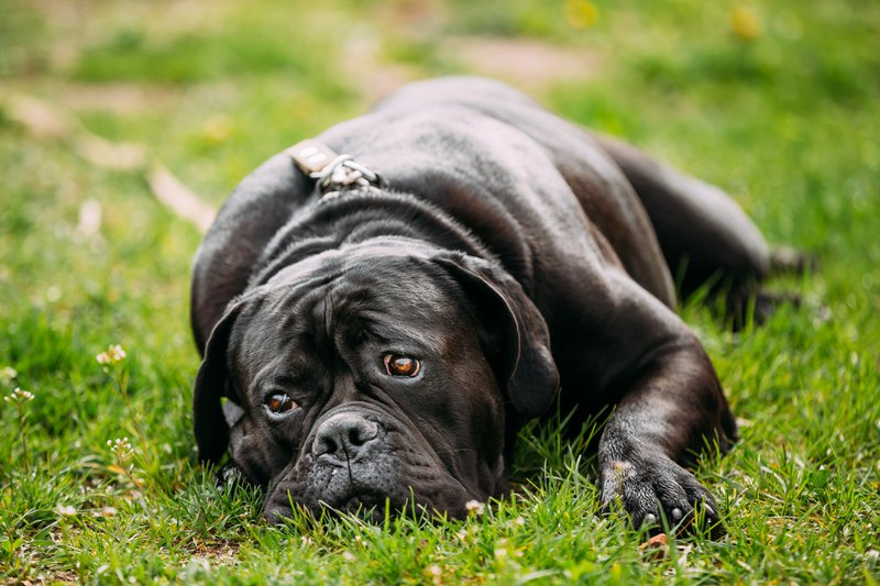 natural solutions for dog anxiety