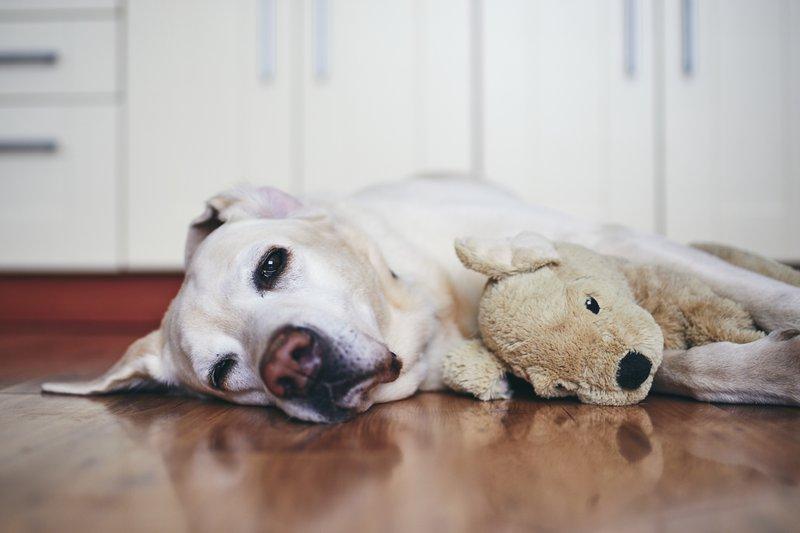 Nutritional Deficiencies in Dogs