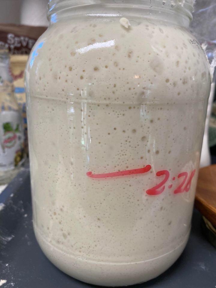 photo of sourdough starter named doughney starks for lil helper blog