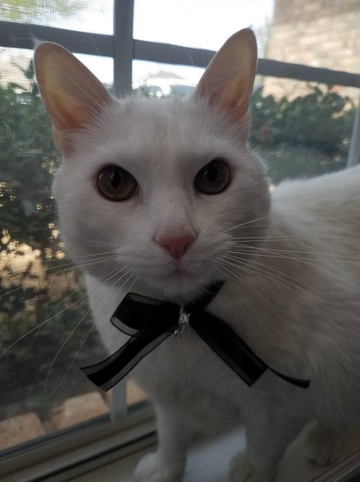 PrettyLitter Cool Cat of the Month Hunter