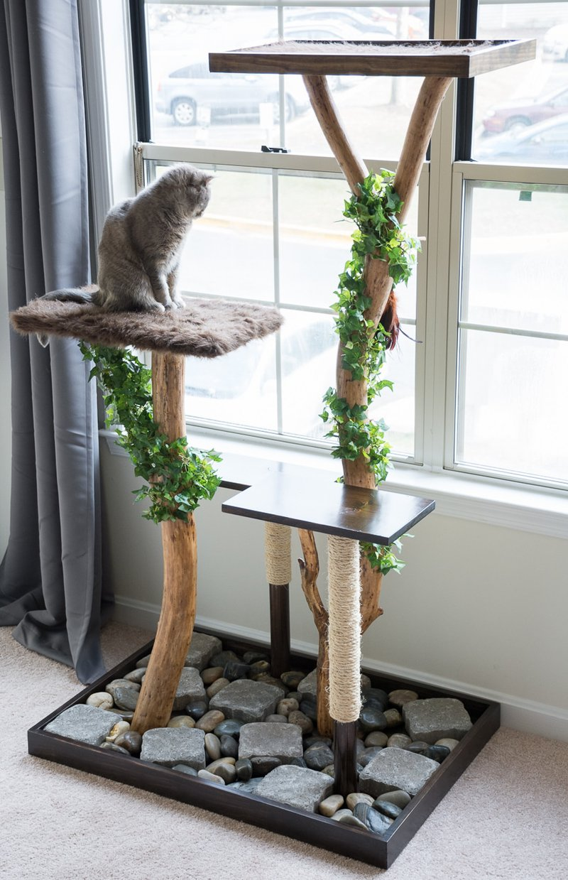 PrettyLitter 4 Awesome Cat Perch Ideas for Your Spoiled Fur-Baby