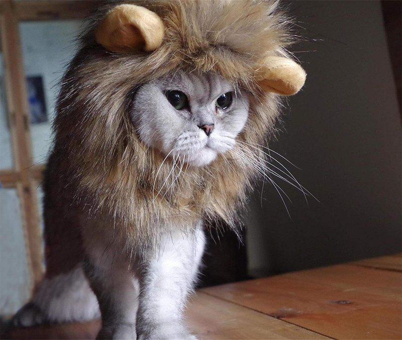 Lion Cat Mane