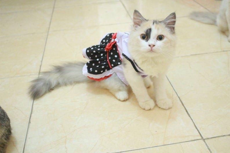 Maid Cat Costume