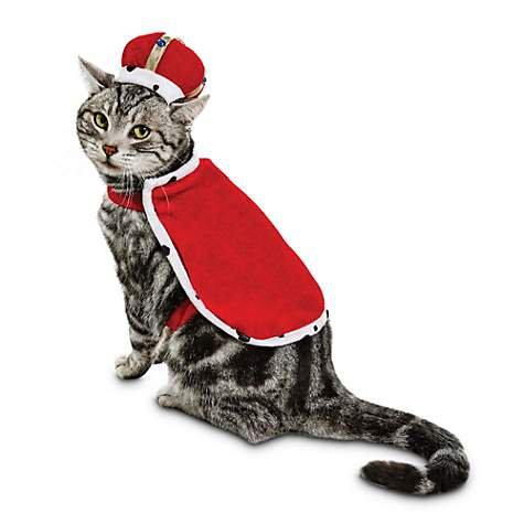 King Cat