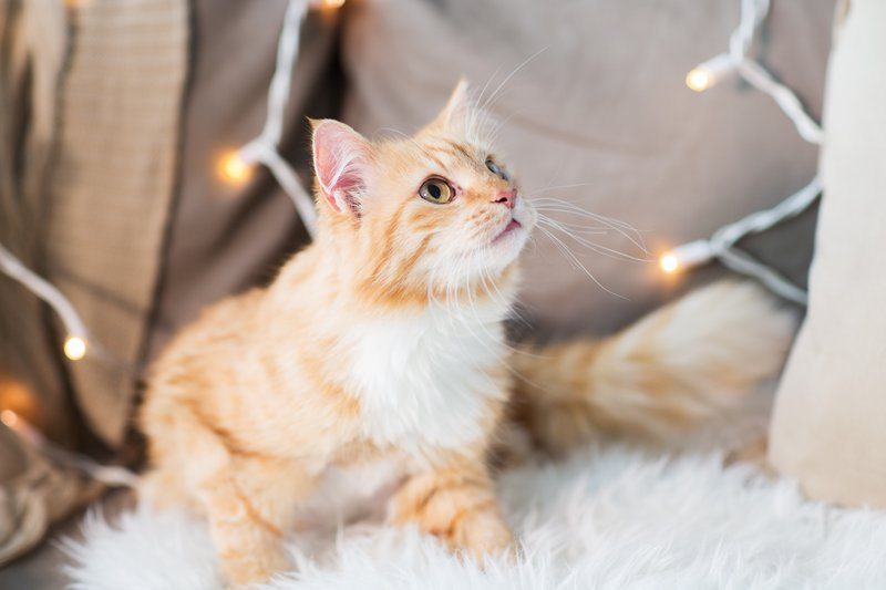 PrettyLitter How to Keep Kitty Safe Around Your Christmas Home Decor