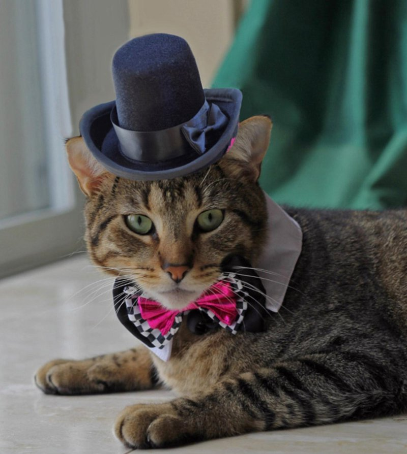 Cat in the Top Hat
