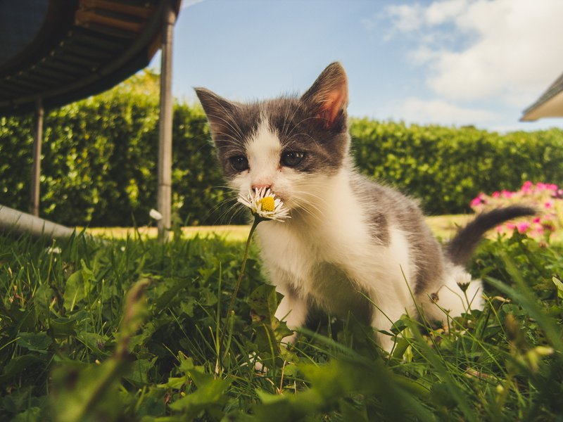 PrettyLitter Tips to Help Your Outdoor Cat Beat the Summer Heat