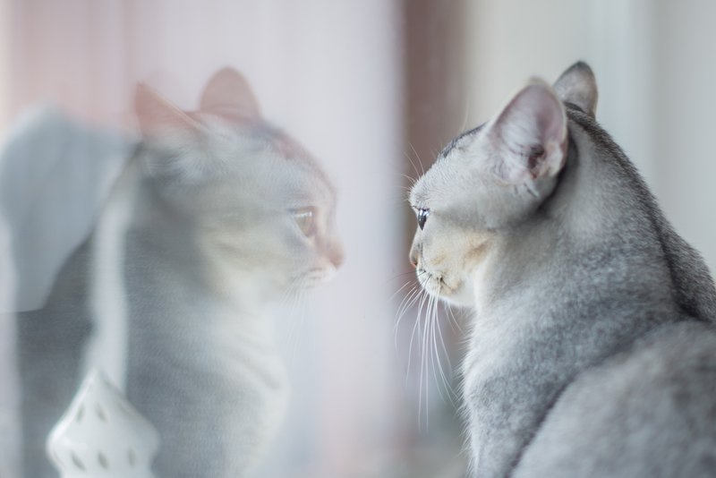 PrettyLitter Avoid Lonely Cat Syndrome This Summer