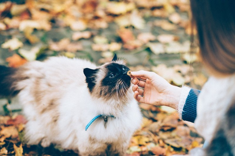 Can Cats Eat Ham? What Is Safe & Unsafe to Feed Your Feline