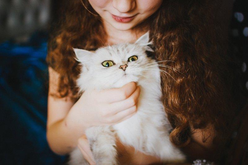 PrettyLitter bipolar cat cat crazies