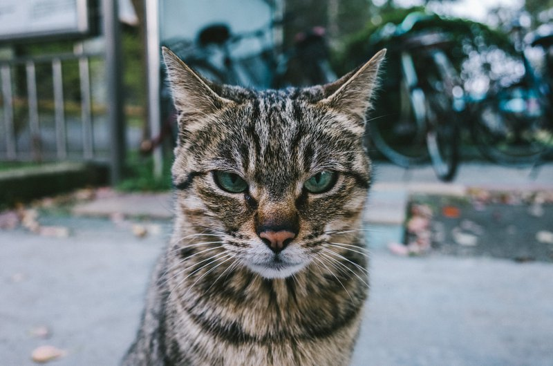 PrettyLitter Cracking the Cat Code: Cat Noises, Moods & What They Mean